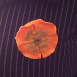 broche coquelicot orange