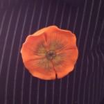 broche coquelicot orange